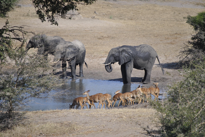 Visit to Tembe Elephant Park - Utshwayelo Lodge Kosi Bay