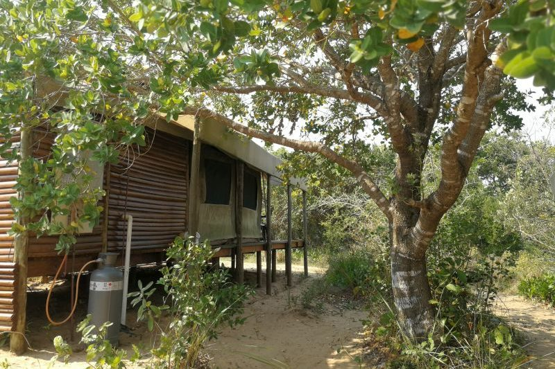 View of Turtle Tent accommodation, Utshwayelo Lodge & Camp, Kosi Bay