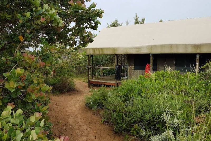 Natural bush encloses tent accommodation for private setting