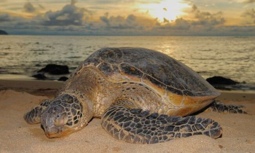 Activities around Kosi Bay Mouth - turtle viewing and guided urtle tours